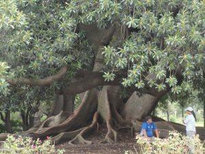 az öreg fa