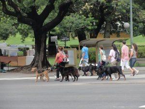 kutya sétáltatók - ha nem is argentin tangóséta