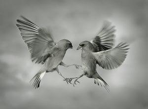 animal-tango