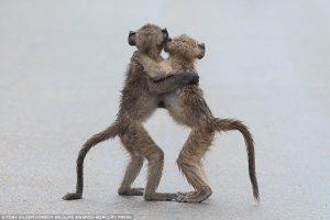 elegant-animal-tango